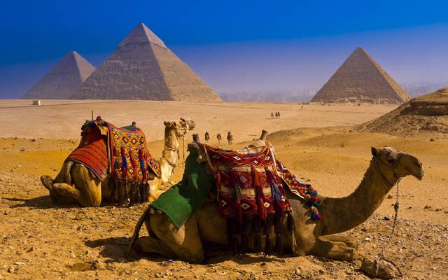 верблюды.jpg