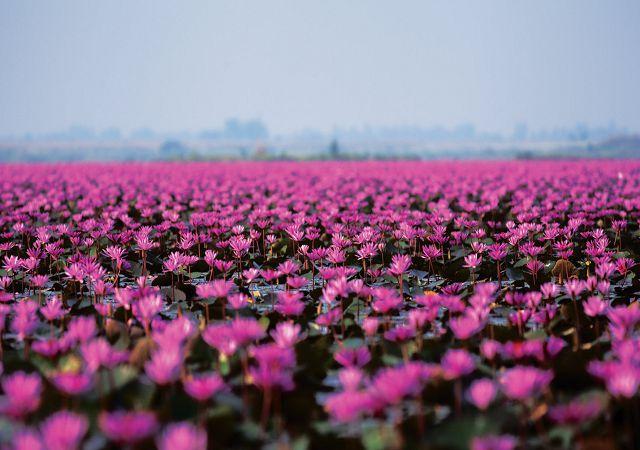 lotos-vietnam.jpg